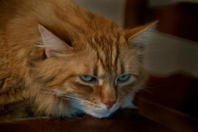 Изображение - Симптомы и лечение гепатита у кошек proxy?url=http%3A%2F%2Ffb.ru%2Fmisc%2Fi%2Fthumb%2Fa%2F1%2F4%2F0%2F4%2F1%2F1%2F3%2F1404113