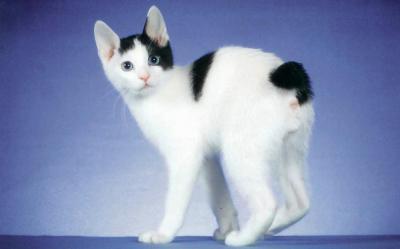 Изображение - Они такие необычные и разные - кошки proxy?url=http%3A%2F%2Ffb.ru%2Fmisc%2Fi%2Fthumb%2Fn%2F9%2F3%2F3%2F2%2F5%2Fi%2F93325