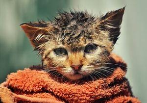 Изображение - Как купать котенка proxy?url=http%3A%2F%2Fkotovasia.net%2Fwp-content%2Fuploads%2F2014%2F08%2FCat-Bathing