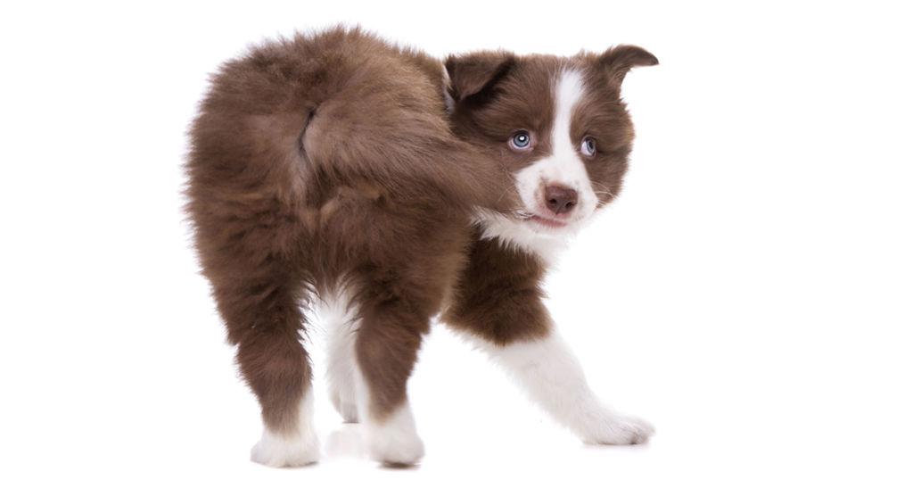 Изображение - Почему собака бегает за своим хвостом proxy?url=http%3A%2F%2Fkotsobaka.com%2Fwp-content%2Fuploads%2F2018%2F07%2F936_93057_1