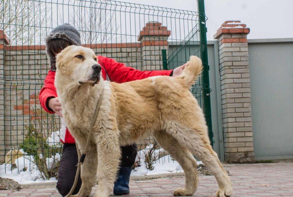 Изображение - Собака для охраны частного дома proxy?url=http%3A%2F%2Fkotsobaka.com%2Fwp-content%2Fuploads%2F2018%2F08%2Fzagruzheno-3