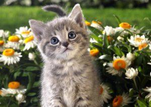 Изображение - Как правильно выбрать имя кошке proxy?url=http%3A%2F%2Fmechtakoshki.ru%2Fwp-content%2Fuploads%2F2016%2F08%2Fwpid-kartinki_kotyata_s_cvetami-300x213