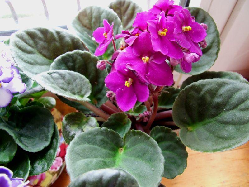 Изображение - 10 растений, которые принесут в ваш дом любовь proxy?url=http%3A%2F%2Fmisstits.ru%2Fwp-content%2Fuploads%2F2016%2F10%2F10-5