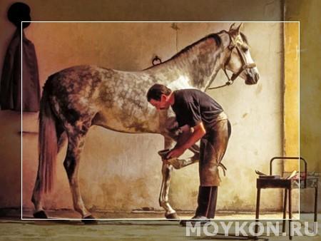 Изображение - Правильный уход за лошадью и ее копытами proxy?url=http%3A%2F%2Fmoykon.ru%2Fwp-content%2Fuploads%2F2014%2F08%2Fspecialist-kopita