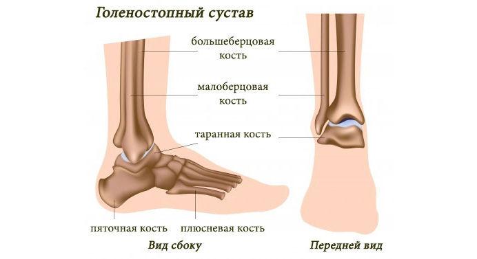 Изображение - Крупные суставы нижних конечностей proxy?url=http%3A%2F%2Fnashinogi.ru%2Fwp-content%2Fuploads%2F2016%2F03%2Fgolenostopeyj-sustav