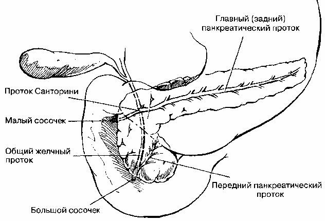Изображение - Фиброз поджелудочной железы лечение диффузной и кистозной форм proxy?url=http%3A%2F%2Fpishchevarenie.ru%2Fwp-content%2Fuploads%2F2016%2F04%2Fanatomiy