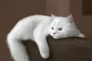 Изображение - Приснился белый кот proxy?url=http%3A%2F%2Fsonnikonline.club%2Fwp-content%2Fuploads%2F2016%2F10%2Fbelyy_kot_1_03150936-300x200
