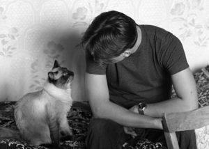 Изображение - Толкование сна говорящая кошка proxy?url=http%3A%2F%2Fsonnikonline.club%2Fwp-content%2Fuploads%2F2017%2F05%2Frazgovarivat_s_kotami_1_15165516-300x214