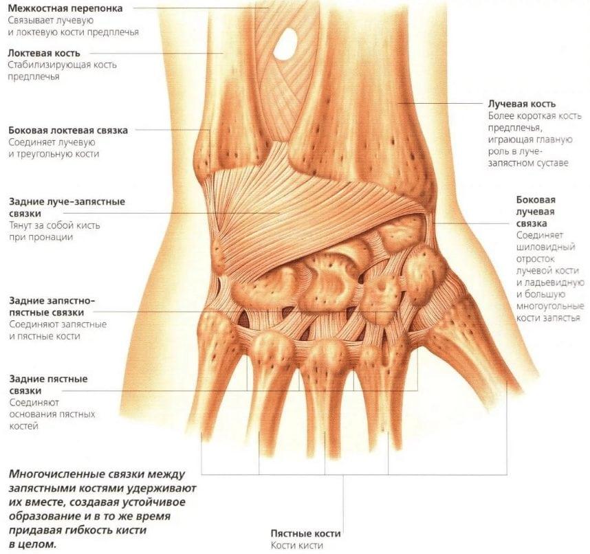 Изображение - Лучезапястный сустав лечить proxy?url=http%3A%2F%2Fsustavlive.ru%2Fwp-content%2Fuploads%2F2017%2F10%2F2017-10-23-16.10.36