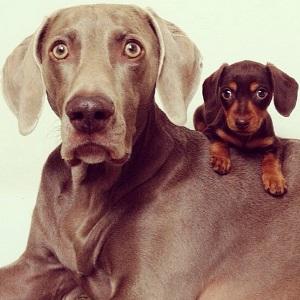 Изображение - Как подружить собаку с собакой proxy?url=http%3A%2F%2Fvseprosobak.ru%2Fwp-content%2Fuploads%2F2016%2F03%2Fkak-podruzhit-sobaku-foto-005