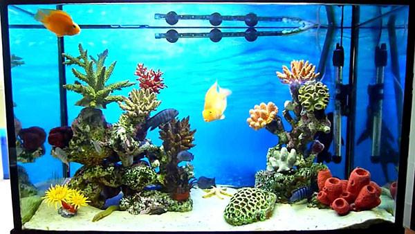 Изображение - Создайте подводное царство при помощи декораций proxy?url=http%3A%2F%2Fwww.aquaworks.ru%2Fimages%2Fakvarium-psevdomore