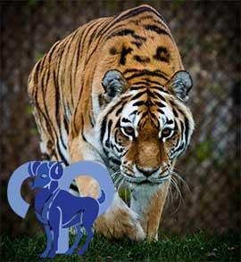Год тигра знак зодиака овен
