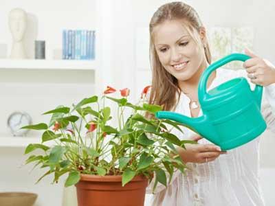 Изображение - Приворот через комнатные цветы proxy?url=http%3A%2F%2Fwww.magya-nikolaev.ru%2Fstatic%2Fup%2Fimages%2Fkartinki--9%2Fpiante02