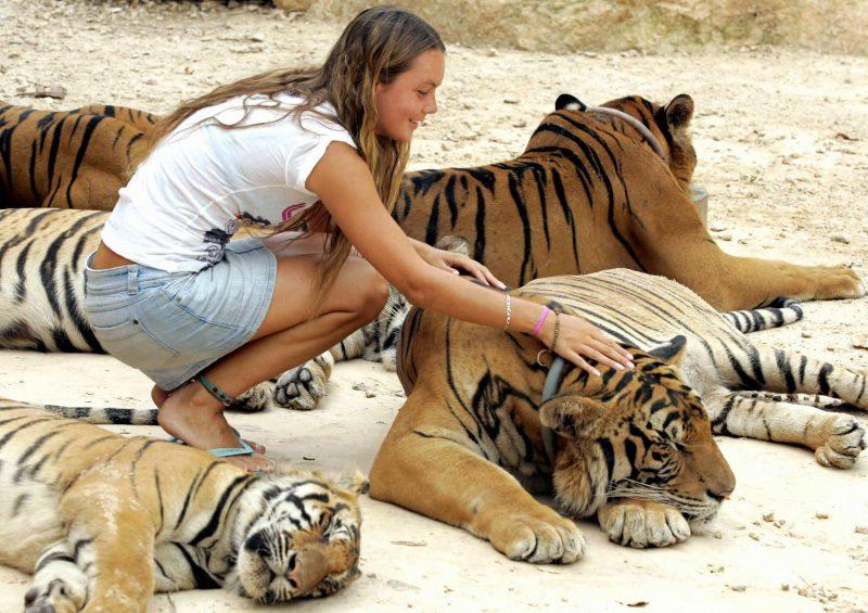 Изображение - К чему снится тигр нападает proxy?url=https%3A%2F%2Fattuale.ru%2Fwp-content%2Fuploads%2F2018%2F03%2Fad_222438214-800x565
