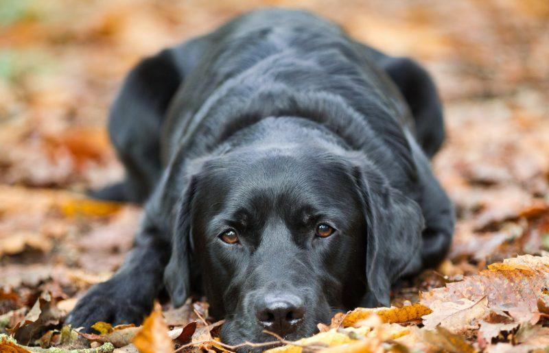 Изображение - Толкование сна собаки proxy?url=https%3A%2F%2Fattuale.ru%2Fwp-content%2Fuploads%2F2018%2F03%2Fsobaka-vzglyad-drug-800x515