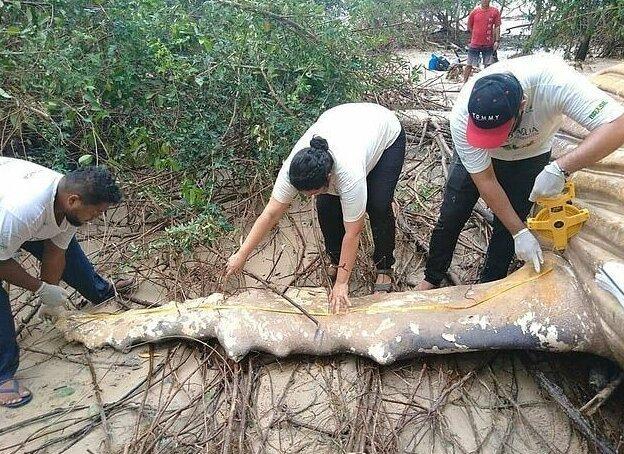 Изображение - Среди бразильских джунглей амазонки нашли тушу десятитонного кита proxy?url=https%3A%2F%2Fbigpicture.ru%2Fwp-content%2Fuploads%2F2019%2F02%2Fhumpbackwhale03