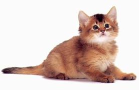 Изображение - Как правильно воспитывать кошку proxy?url=https%3A%2F%2Fbosch-club.ru%2Fupload%2Fmedialibrary%2F57d%2F57dff62addab5932fa42812682fc1121
