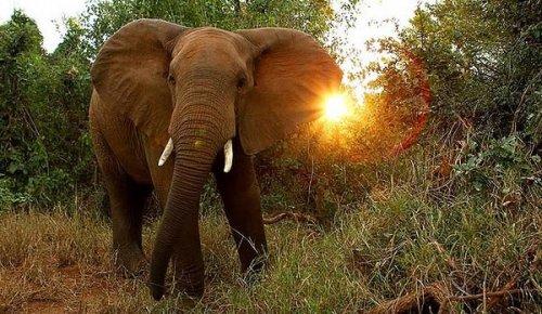 Изображение - Неприветливый носорог из крюгера атаковал автомобиль с туристами proxy?url=https%3A%2F%2Fbugaga.ru%2Fuploads%2Fposts%2F2014-09%2Fthumbs%2F1411457825_safari-7