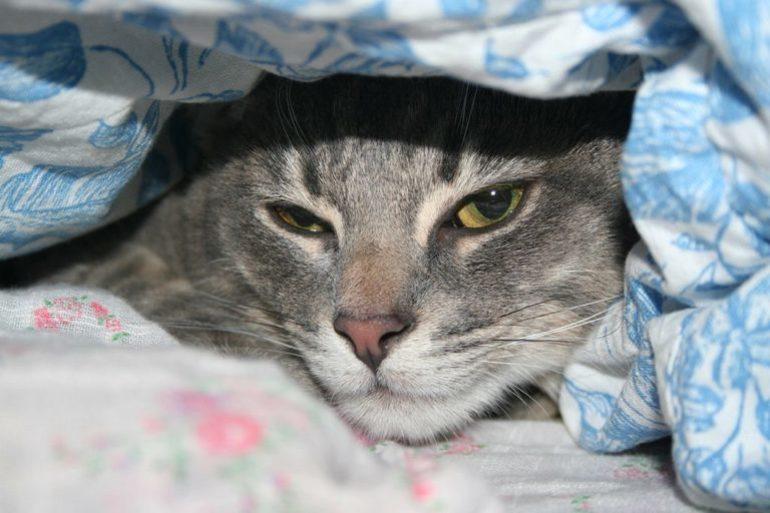 Изображение - Нормальная температура у кошек что делать при ее отклонении proxy?url=https%3A%2F%2Fdalmspb.com%2Fwp-content%2Fauploads%2F779463%2Fnormalnaya_temperatura_koshek