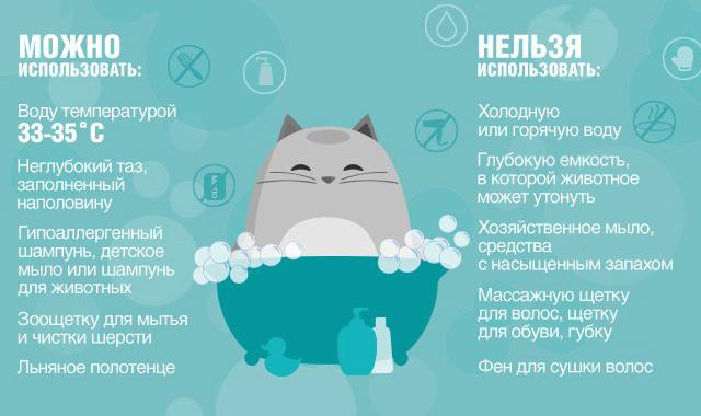 Изображение - Шотландские вислоухие кошки кормление и особенности ухода proxy?url=https%3A%2F%2Fdogbuldog.ru%2Fwp-content%2Fuploads%2F2018%2F02%2Fhow-to-wash-your-cat