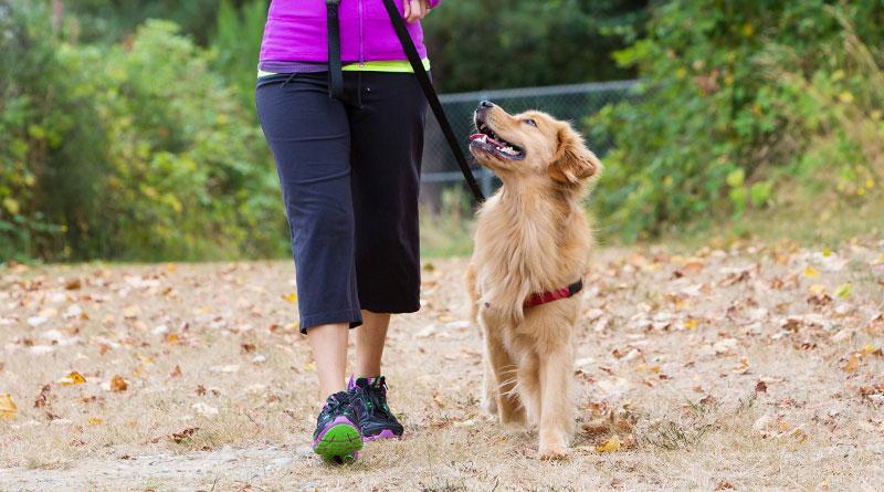 Изображение - Как отучить собаку подбирать еду на улице proxy?url=https%3A%2F%2Fdogipediya.ru%2Fwp-content%2Fuploads%2F2019%2F02%2Fotuchit-sobaku-podbirat-1