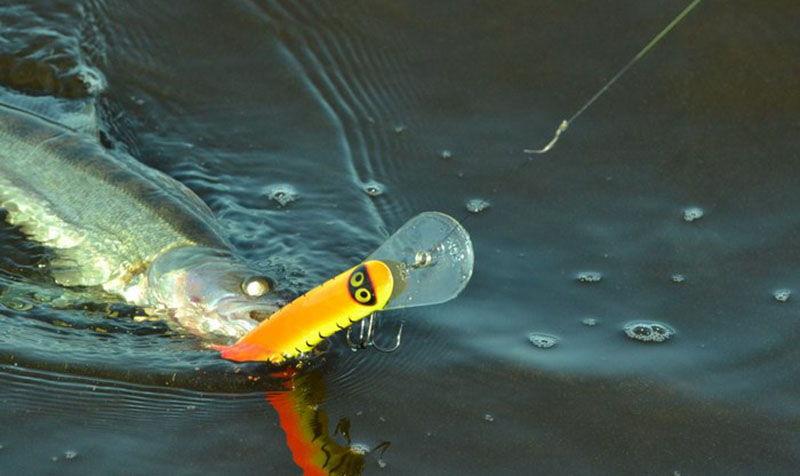 Изображение - Как ловить судака на воблеры по открытой воде proxy?url=https%3A%2F%2Ffishingsecrets.info%2Fwp-content%2Fuploads%2F2017%2F09%2Fvobler3