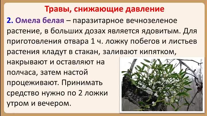 Изображение - Растения понижающие артериальное давление proxy?url=https%3A%2F%2Fgipertenziya.com%2Fwp-content%2Fuploads%2F2018%2F09%2FgetImage-1