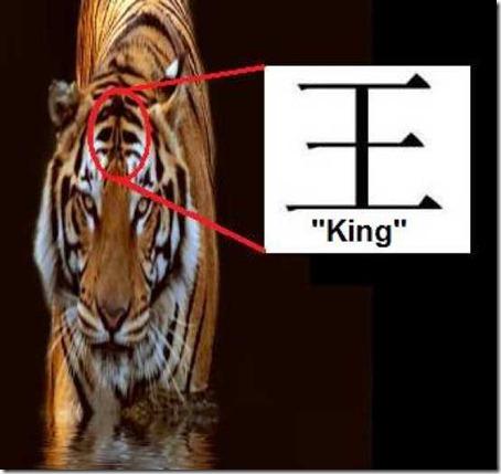 Изображение - Самка тигра редкого вида дала потомство в индонезийском зоопарке proxy?url=https%3A%2F%2Fic.pics.livejournal.com%2Fpapyrus_net%2F26436479%2F1024557%2F1024557_original