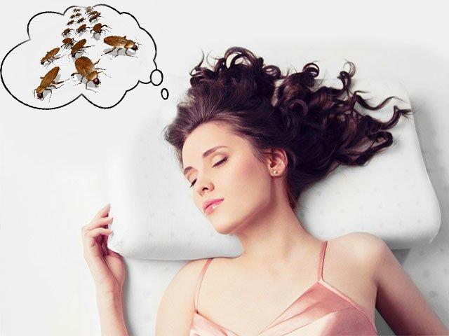 Изображение - К чему снятся тараканы в квартире proxy?url=https%3A%2F%2Fkrestyanka.com%2Fwp-content%2Fuploads%2F2018%2F09%2F1-64