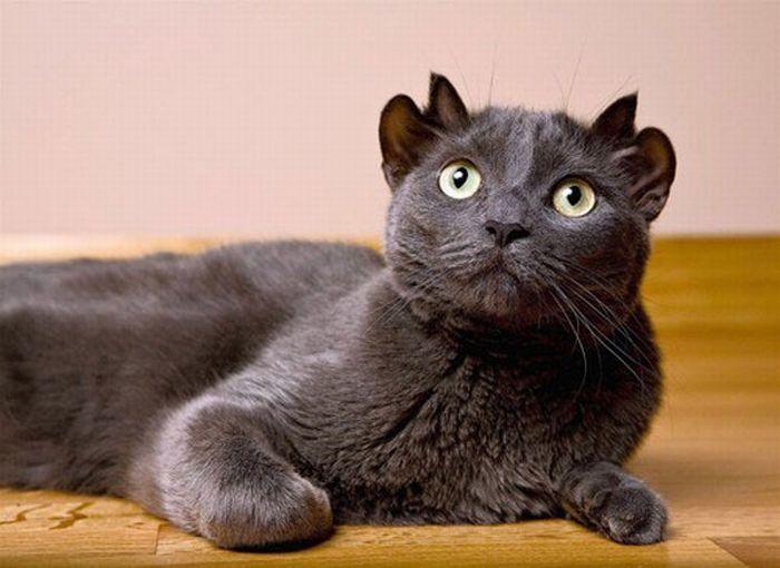 Изображение - Кошка с далекой галактики по кличке йода proxy?url=https%3A%2F%2Fkykarek.com%2Fwp-content%2Fuploads%2FJoda_cat