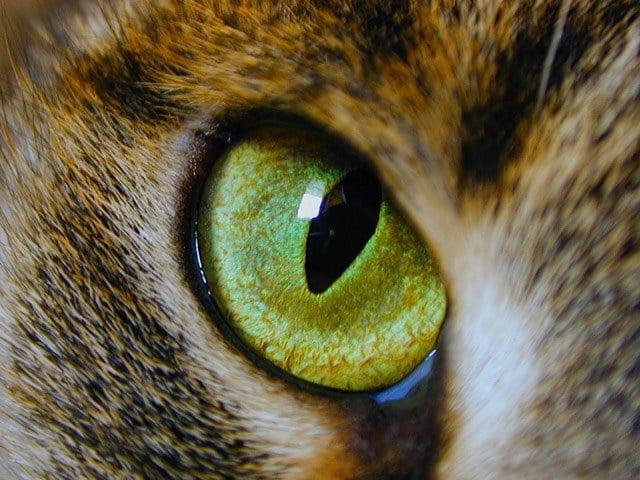 Изображение - Мир глазами кошек proxy?url=https%3A%2F%2Fkykarek.com%2Fwp-content%2Fuploads%2Fglaz-1-1