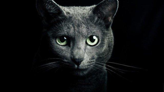 Изображение - Основы дрессировки котов, кошек и котят proxy?url=https%3A%2F%2Fkykarek.com%2Fwp-content%2Fuploads%2Fkotik-e1444210230542