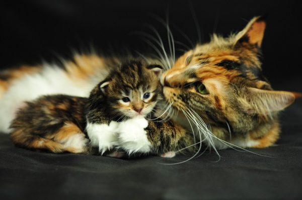 Изображение - К чему снятся котята proxy?url=https%3A%2F%2Flegkovmeste.ru%2Fwp-content%2Fuploads%2F2019%2F02%2Fpost_5b1b6fa64810c-600x398