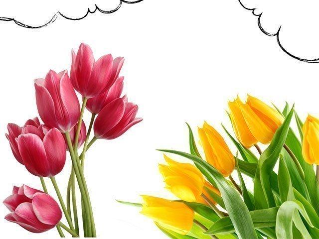 Изображение - Толкование сна тюльпаны proxy?url=https%3A%2F%2Fmysekret.ru%2Fwp-content%2Fuploads%2F2017%2F04%2F1-44