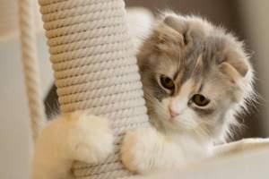Изображение - Royal canin для кошек виды кормов, их преимущества и недостатки proxy?url=https%3A%2F%2Fokotikah.ru%2Fwp-content%2Fuploads%2F2017%2F05%2F4