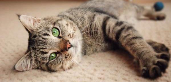 Изображение - Анкилостома у кошек лечение proxy?url=https%3A%2F%2Fpets-expert.ru%2Fwp-content%2Fuploads%2F2018%2F06%2F6-13-e1529390526324