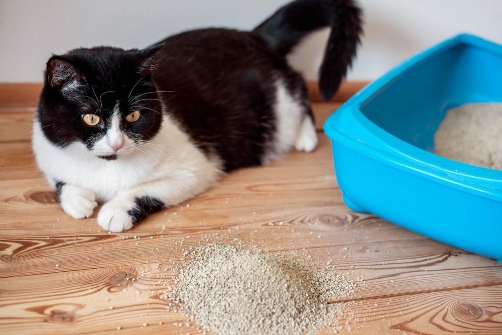 Изображение - Лечение цистита у кошек proxy?url=https%3A%2F%2Fpets-expert.ru%2Fwp-content%2Fuploads%2F2018%2F07%2F%25D0%25A6%25D0%25B8%25D1%2581%25D1%2582%25D0%25B8%25D1%2582-%25D0%25B7%25D0%25B0%25D1%2582%25D1%2580%25D0%25B0%25D0%25B3%25D0%25B8%25D0%25B2%25D0%25B0%25D0%25B5%25D1%2582-%25D0%25BA%25D0%25B0%25D0%25BA-%25D0%25BC%25D0%25BE%25D1%2587%25D0%25B5%25D0%25BF%25D0%25BE%25D0%25BB%25D0%25BE%25D0%25B2%25D1%2583%25D1%258E-%25D1%2581%25D0%25B8%25D1%2581%25D1%2582%25D0%25B5%25D0%25BC%25D1%2583-%25D0%25B2-%25D1%2586%25D0%25B5%25D0%25BB%25D0%25BE%25D0%25BC-%25D1%2582%25D0%25B0%25D0%25BA-%25D0%25B8-%25D0%25BF%25D0%25BE%25D1%2587%25D0%25BA%25D0%25B8