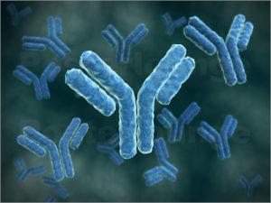 Изображение - Антитела к рецепторам инсулина норма анализа proxy?url=https%3A%2F%2Fpridiabete.ru%2Fwp-content%2Fuploads%2F2017%2F11%2FAntitela-k-insulinu-1-300x225