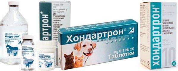 Изображение - Хондартрон что это за препарат и как его давать собаке proxy?url=https%3A%2F%2Frealpet.ru%2Fwp-content%2Fuploads%2F2017%2F11%2Fhondartron-dlya-sobak