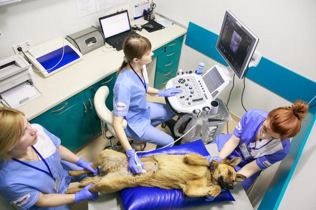 Изображение - Болезни печени у собак симптомы и лечение proxy?url=https%3A%2F%2Frealpet.ru%2Fwp-content%2Fuploads%2F2018%2F06%2F496-e1528030444517
