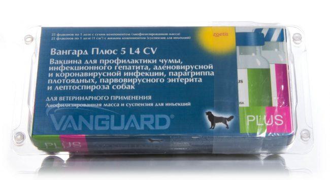 Изображение - Может ли привитая собака заболеть чумкой proxy?url=https%3A%2F%2Frealpet.ru%2Fwp-content%2Fuploads%2F2018%2F07%2F2809ba032bb74eefd62b17c9e10275e1-e1530892859721