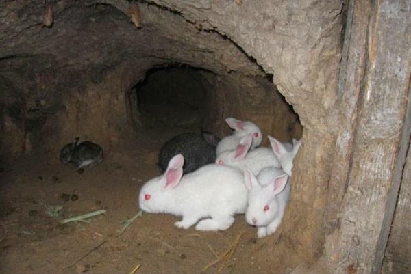 Изображение - Разведение кроликов как бизнес proxy?url=https%3A%2F%2Fselo-exp.com%2Fwp-content%2Fuploads%2F2018%2F07%2F11