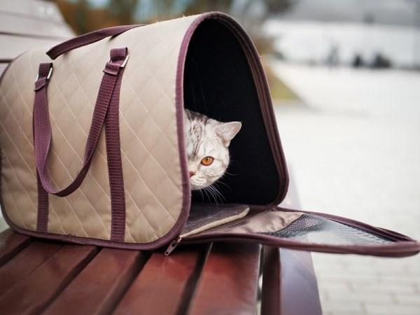 Изображение - Переноска для кошек правила выбора proxy?url=https%3A%2F%2Fst03.kakprosto.ru%2Ftumb%2F680%2Fimages%2Farticle%2F2014%2F7%2F12%2F1_53cca2c683c7d53cca2c683cba