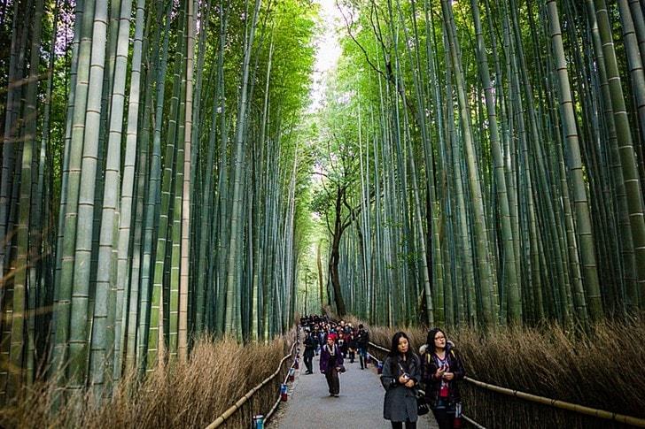 Изображение - Какие достопримечательности есть в японии proxy?url=https%3A%2F%2Ftop10.travel%2Fwp-content%2Fuploads%2F2016%2F05%2Farasiyama