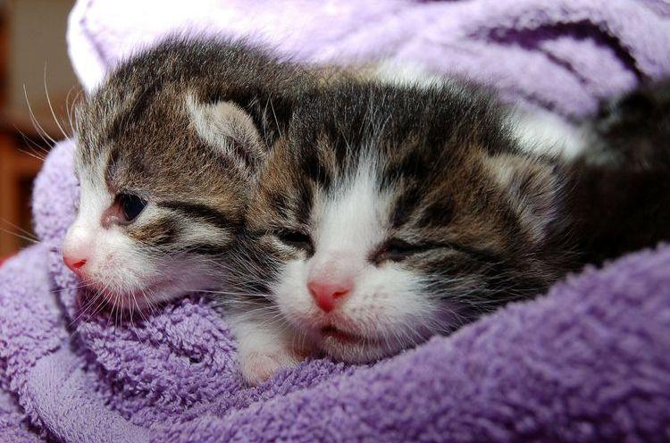 Изображение - Как применять для кошек ветом 1.1 proxy?url=https%3A%2F%2Fusatiki.ru%2Fwp-content%2Fuploads%2F2018%2F10%2Fvetom-dlya-koshek-5