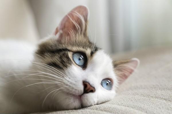 Изображение - Анкилостомоз у кошек proxy?url=https%3A%2F%2Fvashipitomcy.ru%2Fwp-content%2Fuploads%2F_pu%2F15%2F75101319
