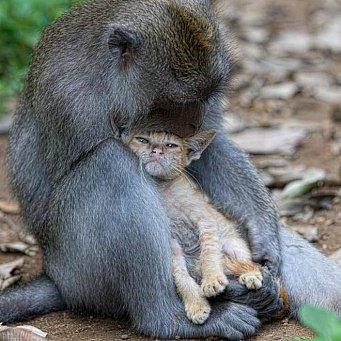 Изображение - Макака приняла младенца за своего детёныша и отказалась отдавать его матери proxy?url=https%3A%2F%2Fwww.8lap.ru%2Fupload%2Fresize_cache%2Fiblock%2Fd46%2F341_341_2%2Fd46104bfff53dda4ee787223a22d711f