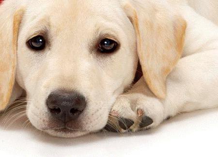 Изображение - Эпилепсия у собак виды, симптомы и лечение proxy?url=https%3A%2F%2Fwww.syl.ru%2Fmisc%2Fi%2Fai%2F196370%2F856540