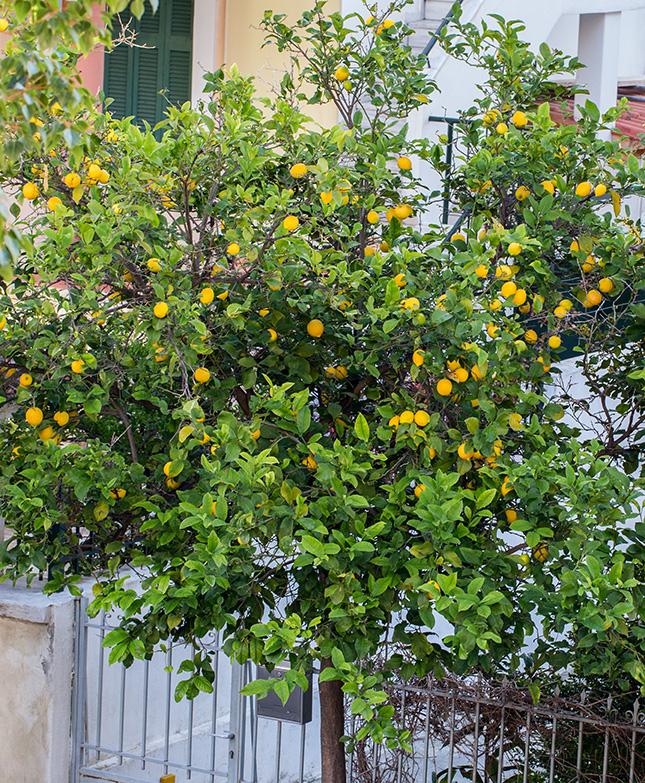 рецепт капкейков лимонных