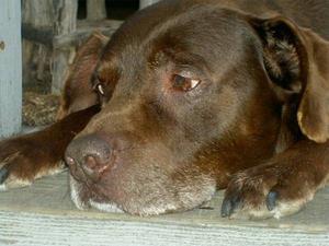 Изображение - Симптомы и лечение цистита у собаки в домашних условиях proxy?url=https%3A%2F%2Fzoolog.guru%2Fimages%2F101191%2Fprofilakticheskie-mery-pri-tsistite